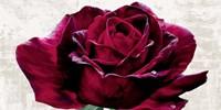 Purple Dame Fine Art Print