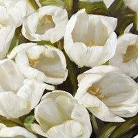 Bianco I Fine Art Print