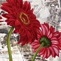 Red Gerberas III Fine Art Print