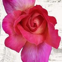 Spring Roses I Fine Art Print