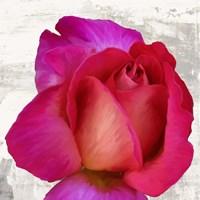 Spring Roses III Fine Art Print