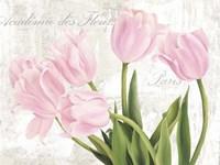 Academie des Fleurs Fine Art Print