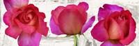 Spring Roses Fine Art Print