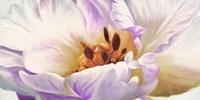 Tulipe Fine Art Print