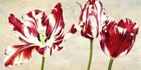 Tulipes Royales Fine Art Print