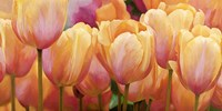 Summer Tulips Fine Art Print