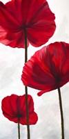 Reds III Fine Art Print
