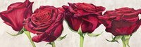 Rose Romantiche Fine Art Print
