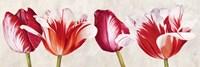 Gioiosi Tulipani Fine Art Print