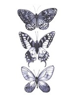 Monochrome Butterflies I Framed Print