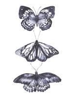 Monochrome Butterflies II Framed Print