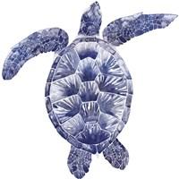 Marine Turtle II Framed Print