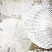 White Shells II Fine Art Print
