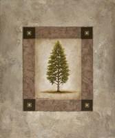 European Pine I Framed Print