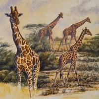 Safari III Fine Art Print