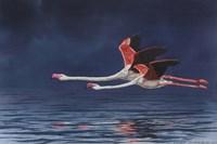 Flying Flamingos Fine Art Print