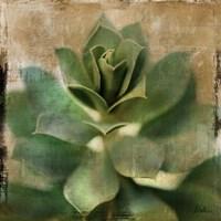 Succulent I Fine Art Print