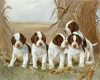 Belle's Pups Fine Art Print