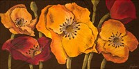 Dazzling Poppies II (black background) Fine Art Print