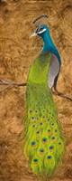 Peacocks I Fine Art Print