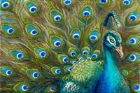 Wild Feathers Fine Art Print