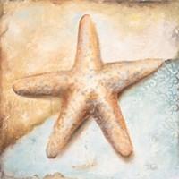Seashell Collection II Fine Art Print