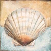 Seashell Collection III Fine Art Print