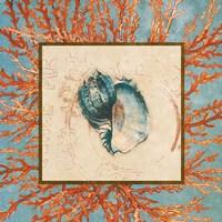 Coral Medley Shell II Fine Art Print