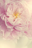 Angelic Petals Fine Art Print