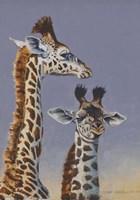 Two Young Giraffes Fine Art Print