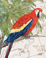 Another Bird in Paradise I Fine Art Print