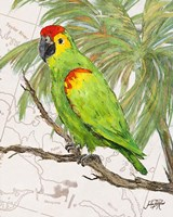 Another Bird in Paradise II Fine Art Print
