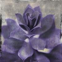 Lavender Succulent I Framed Print