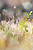 Soft Morning Dew II Fine Art Print