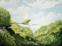 Egret Fine Art Print