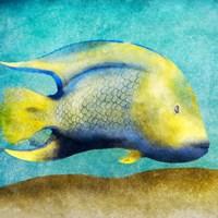Fish I Framed Print
