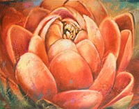 Red Lotus II Fine Art Print