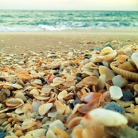 Shells Beach I Fine Art Print