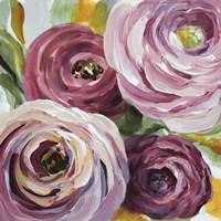 Ranunculus Rosa II Framed Print