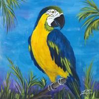 Island Birds Square II Framed Print