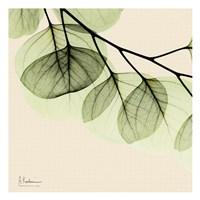 Mint Eucalyptus 3 Fine Art Print