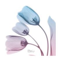 Soft Tulips Rose Serenity Fine Art Print