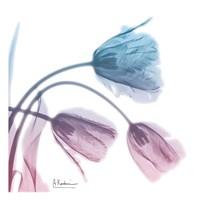 Tulips Rose Serenity Fine Art Print