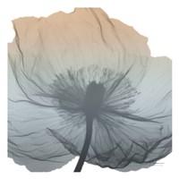 Poppy Earthy Beauty Fine Art Print