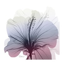 Tasty Grape Hibiscus Fine Art Print