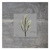 Concrete Rosemary Fine Art Print