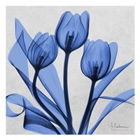 Midnight tulips 2 Fine Art Print