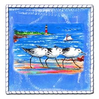 Beach-Front-Shore Birds Fine Art Print