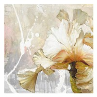 Touch Of Elegance Fine Art Print