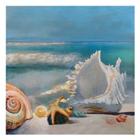 Sea Shells Fine Art Print